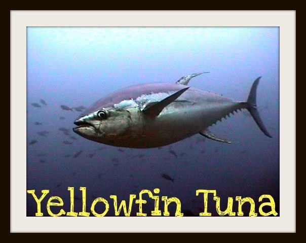 Marine animals sunlight zone picture to pin on pinterest for Twilight zone fish